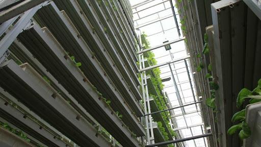 skygreens-vertical-farm-9