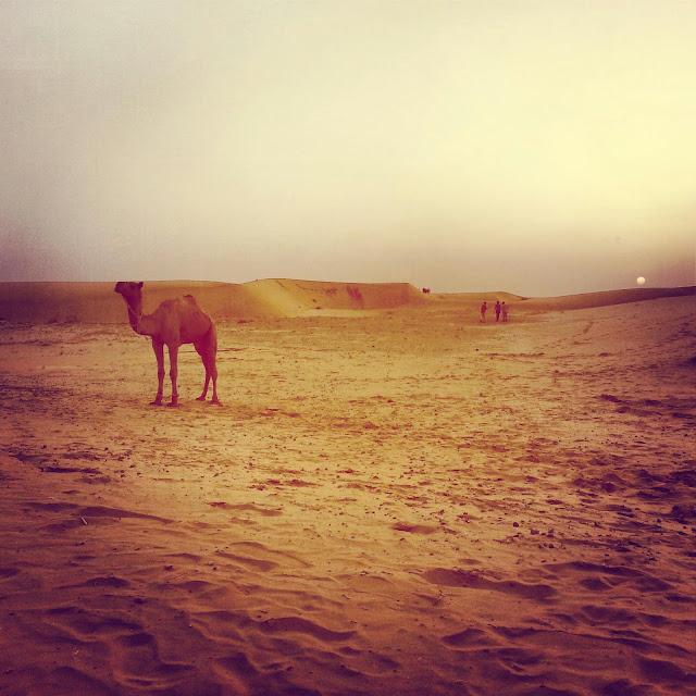 The desert outside Jaisalmer