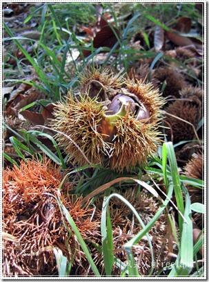 chestnuts5