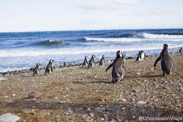 Puerto-Natales-Punta-Arenas-Visitas-imprescindibles-unaideaunviaje-9.jpg