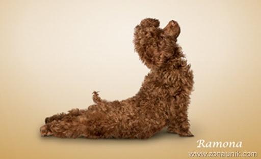 Anjing Senam Yoga (4)