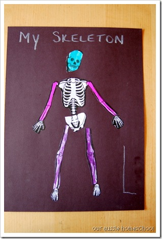 Our Aussie Homeschool ~ My Skeleton