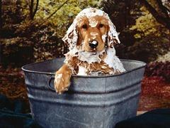 cachorro-tomando-banho