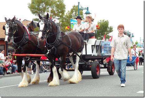 horses big