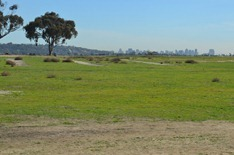 Fiesta Island Dog Park with downtown San Diego in the distance