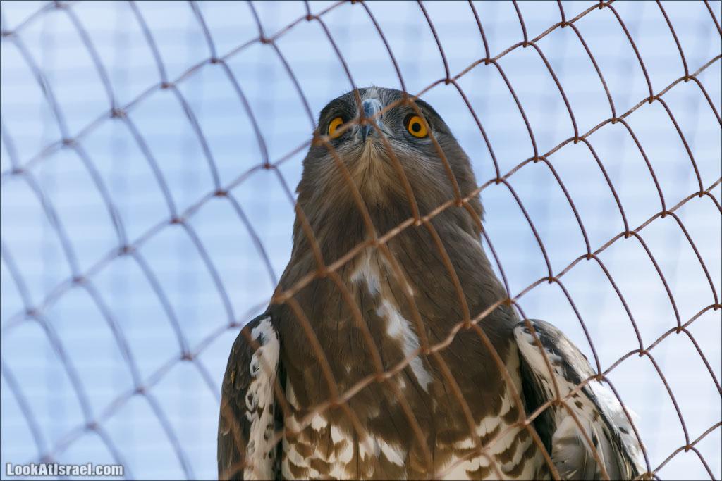 LookAtIsrael.com - Заповедник библейских животных Хай Бар | Hai Bar reserve | חי בר
