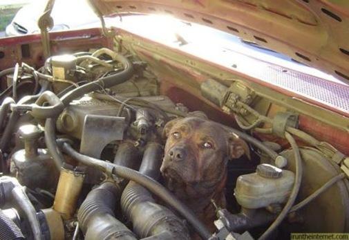 dog-in-engine-bay-power-12729761335