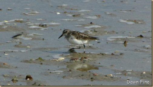 birding south beach_021