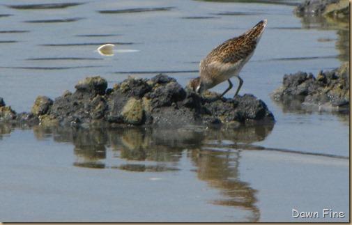 Birding Clamming_017