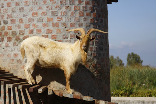 goat-tower-5