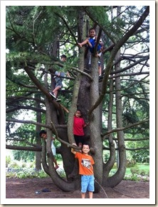 lots of kids in a cool tree