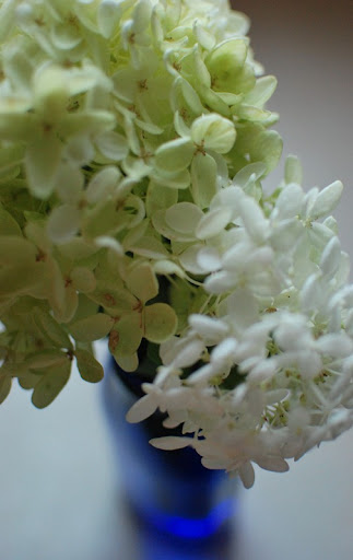glass, pillow, hydrangeas 035