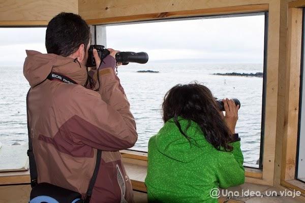 Illugastadir-Islandia-focas-4.jpg