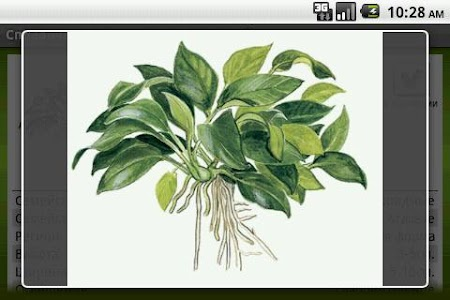 Aquatic plants Free screenshot 2