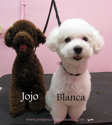 Blanca and Jojo The  Toypoodle