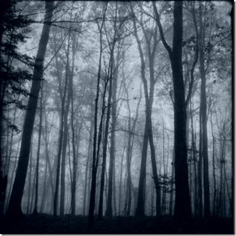 DaRK_FoReST_by_day_light