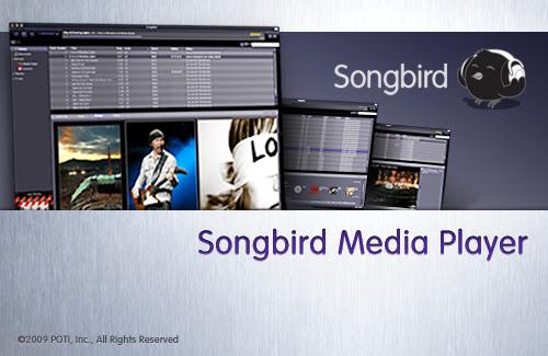 The songbird splash