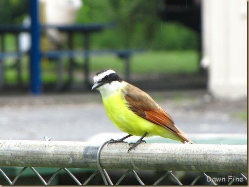 Birding valley nature center_004