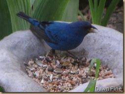 Birdies in the Garden_20090429_014