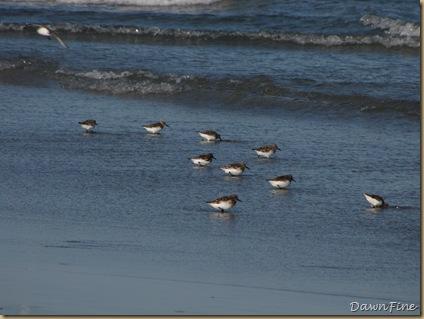 Nummy Island, NJ_20090520_093