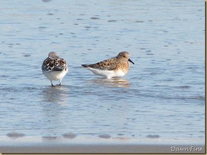 Nummy Island, NJ_20090520_100