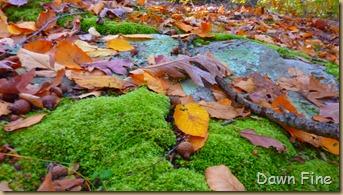 Autumn_039