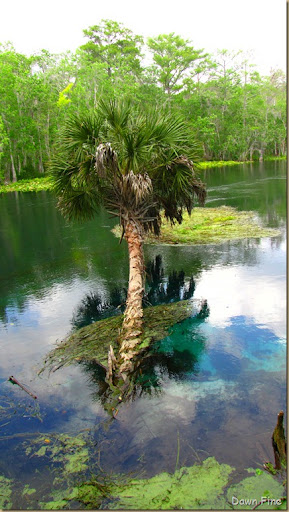 Silver Springs State Park_259