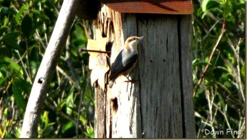 yard birding_024