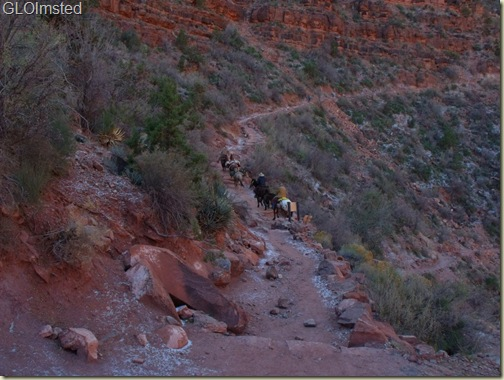 Mule train passing 3-mile house Bright Angel trail Grand Canyon National Park Arizona