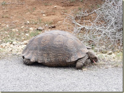Tortoise at Addo Elephant National Park Eastern Cape South Africa