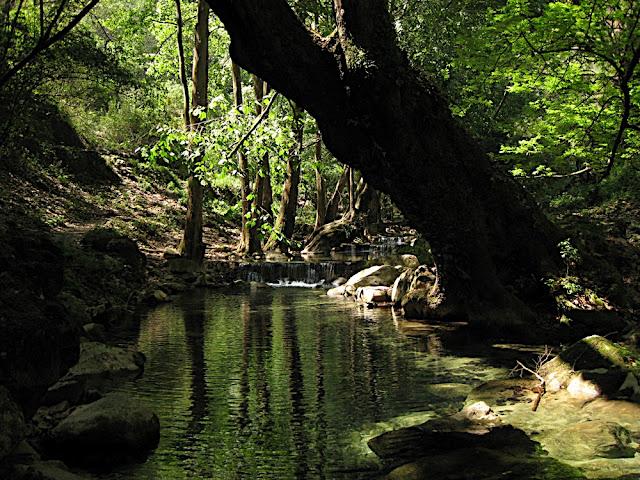 Arroyo en el Salto del Chuveje
