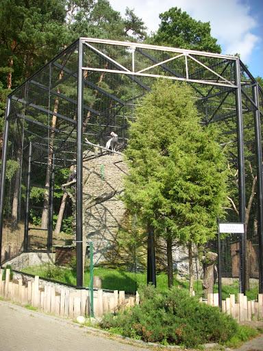Nowa woliera kondorów - Zoo Oliwa