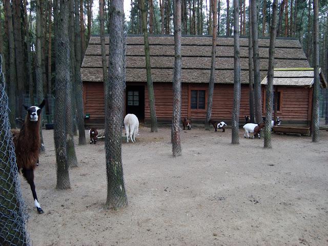Mieszkańcy Małego Zoo