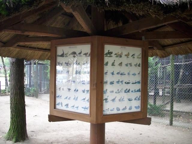 A ty ile znasz gatunków ptaków? Po angielsku?