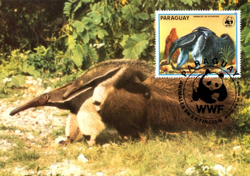Pocztówka ze znaczkiem z mrówkojadem