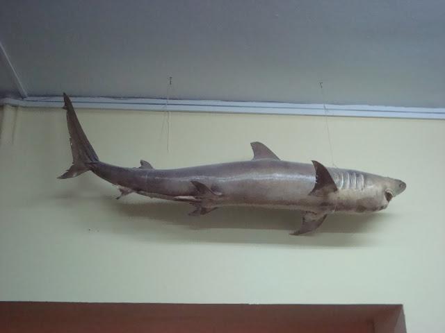 Rekin nad szatnią