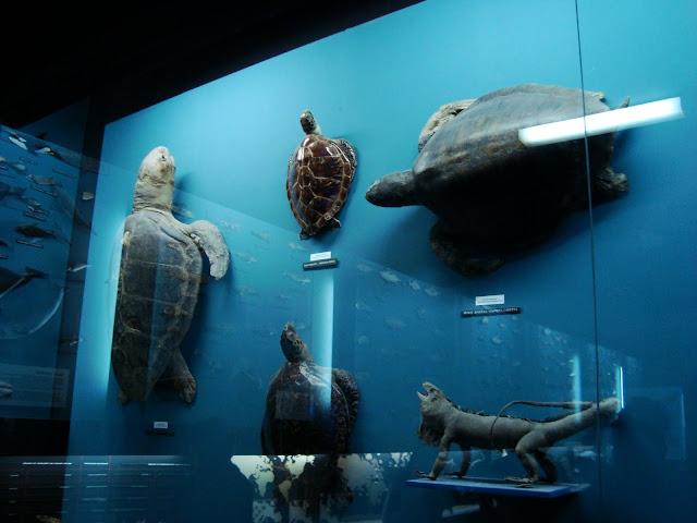 Gady morskie w Sali Dydaktycznej Akwarium Gdyńskiego