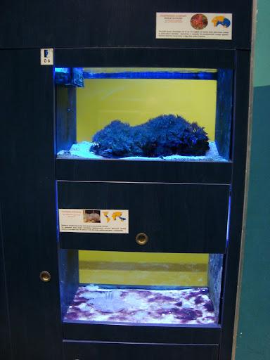 W górnym akwarium możemy zobaczyć homara hawajskiego, w dolnym meduzy
