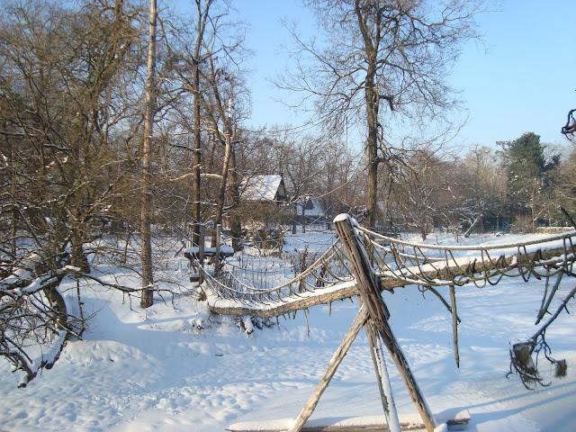 Wyspa gibonów tonie w śniegu