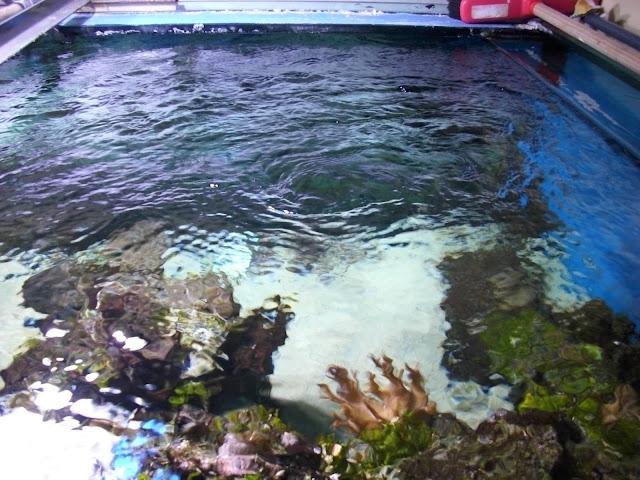 Akwarium we wrocławskim zoo - widok od strony zaplecza