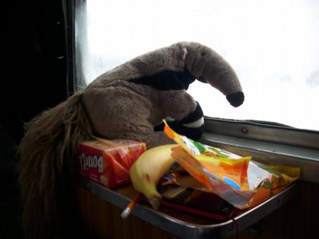 Banan - jak wiadomo, przysmak pluszowych mrówkojadów...