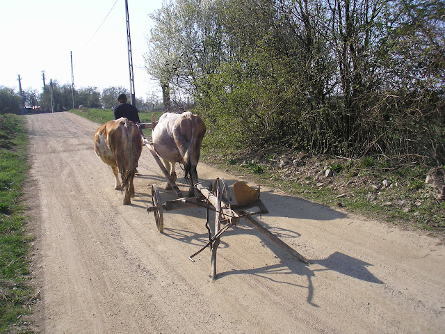 Old man smoking, dirt road, two cows, a plough. Romania is pretty cool.
