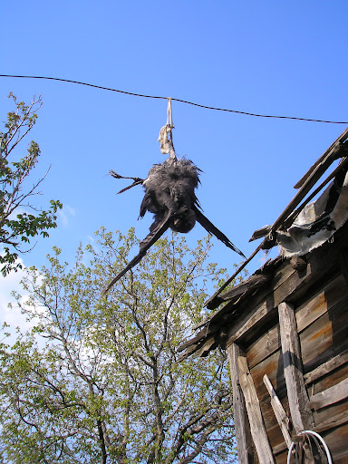 Romanian inventiveness at its finest. Apparently crows dont like the sight of dangling dead crows, so they stay away from the eggs. However, it does mean having a dead crow dangling in your garden.