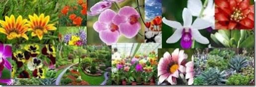 Fotos de jardim dentro de casa