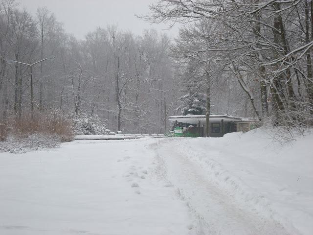 Śnieżne Zoo Poznań