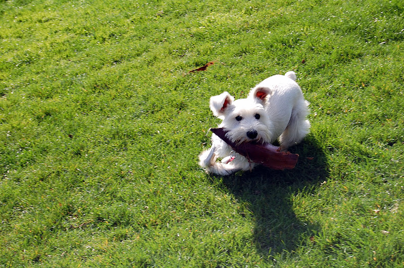 She wanted us to play fetch with a big piece of tree bark. Yeah, complete weirdo!