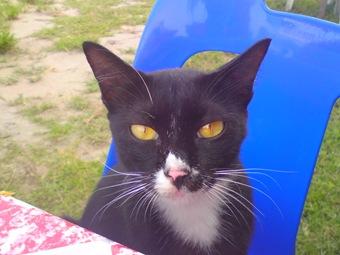 Kucing chumel