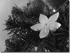 Christmas 2009 027