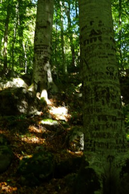 Bad photo but people carve their names in trees a lot in Bulgaria.