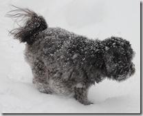 Snow 031